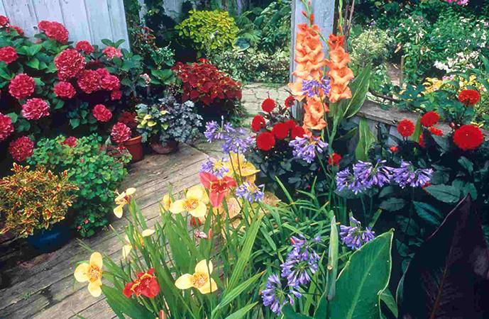สวนในบ้าน