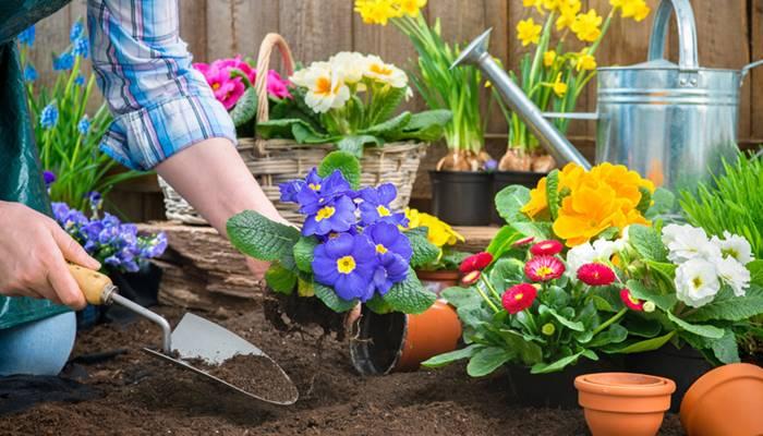 จัดสวนดอกไม้หน้าบ้าน สวยปัง